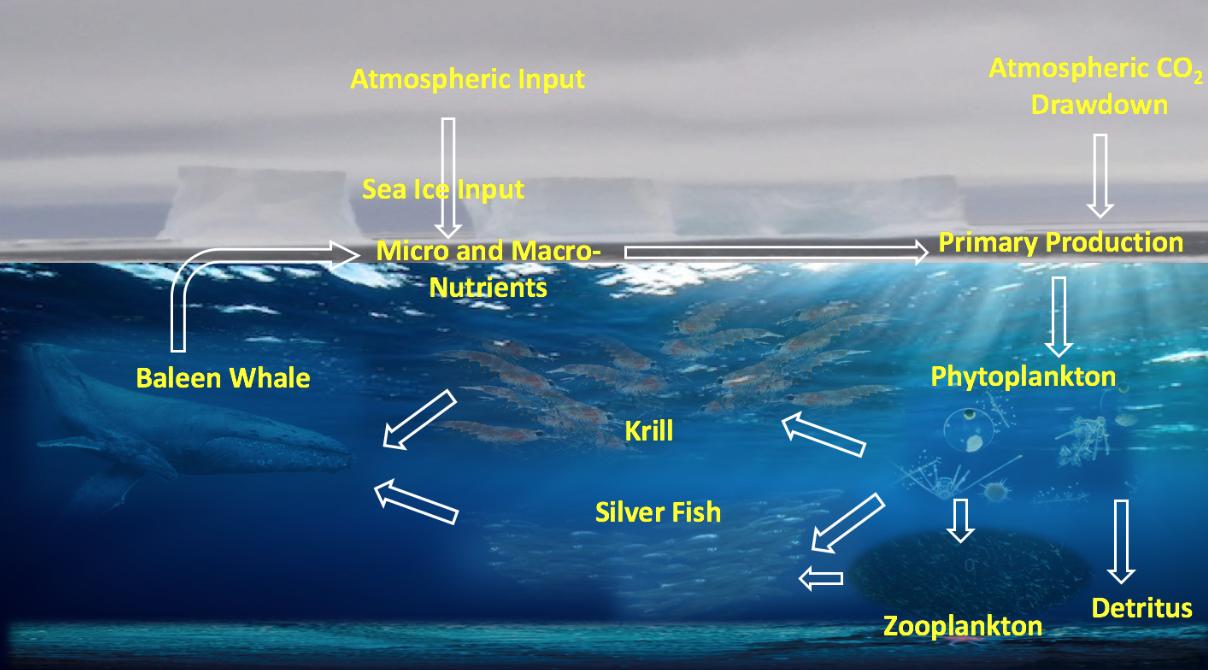 Ocean Processes